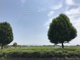 爽やかな香りの写真・画像素材[2164476]