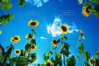 THE 夏の写真・画像素材[2134889]