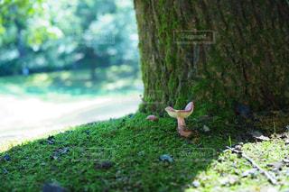 小さい秋、見つけたの写真・画像素材[2211123]