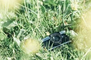 春の思い出の写真・画像素材[3064727]