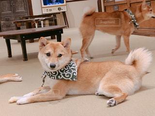 かわいい仔犬の写真・画像素材[2127722]