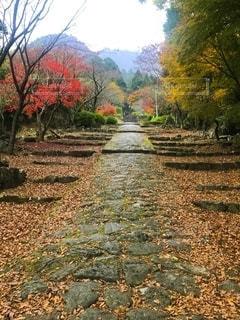 落ち葉の道の写真・画像素材[2565148]