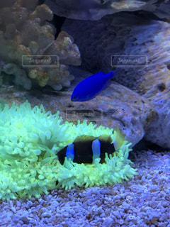 水中で泳いでいる魚の写真・画像素材[2135638]