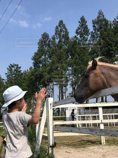 馬の頭のサイズを手で測定中の写真・画像素材[2145696]