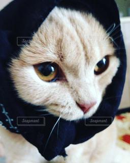 帽子をかぶった猫の接写の写真・画像素材[2131986]