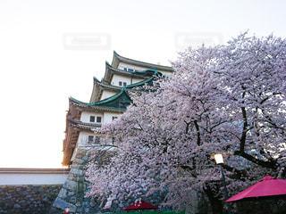 名古屋城と桜の写真・画像素材[2870959]