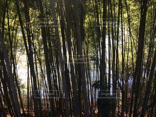 森林の写真・画像素材[156808]