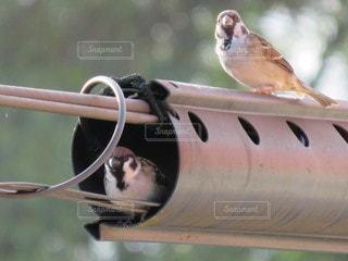 雀の友達の写真・画像素材[2489683]