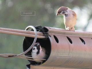 雀の友達の写真・画像素材[2489684]