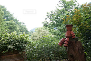 庭にいる人の写真・画像素材[2130531]