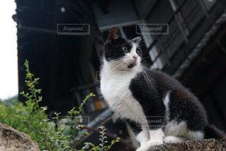 ネコの写真・画像素材[2130532]
