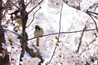 枝に座る鳥の写真・画像素材[2130534]