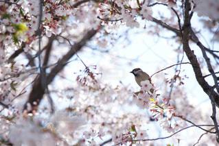 小鳥が木の枝にとまっていたの写真・画像素材[2130535]