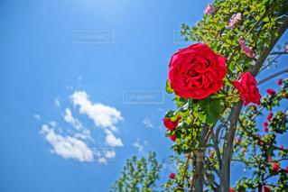 花のクローズアップの写真・画像素材[2130536]