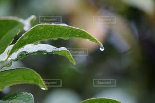 落ちそうな雨の写真・画像素材[2131032]