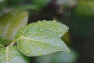 雨上がりの写真・画像素材[2131033]