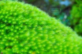 流れる苔の写真・画像素材[4771800]
