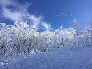 雪に覆われた斜面の写真・画像素材[2135745]