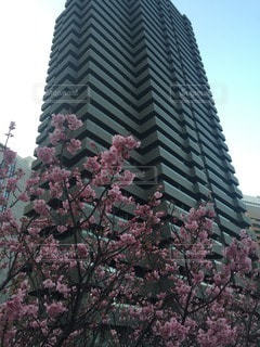 No.83821 桜