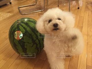 犬の写真・画像素材[83977]