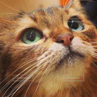 猫 - No.84163