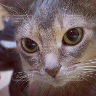 猫が好き - No.84165