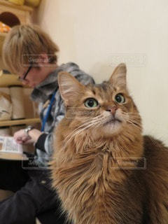 猫 - No.84191