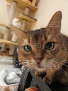 猫 - No.84201