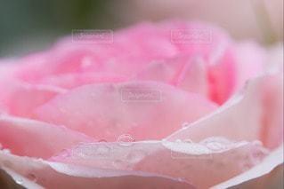 お花畑の写真・画像素材[107810]