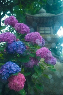 お花畑 - No.107823