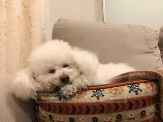 犬 - No.377501