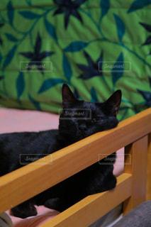 黒い猫が箱に横たわっているの写真・画像素材[2134253]