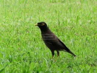 一匹の鳥の写真・画像素材[2157067]