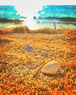 夕日に照らされた貝殻の写真・画像素材[2134792]