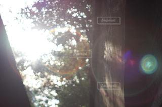 フレアたちの写真・画像素材[2137417]