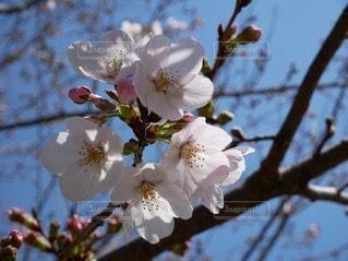 花のクローズアップの写真・画像素材[2135644]