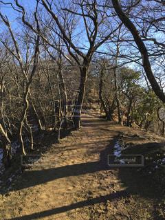 大山 冬の登山道の写真・画像素材[2136705]