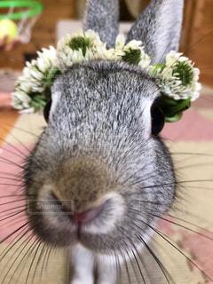 ウサギにお花を💐の写真・画像素材[2138261]