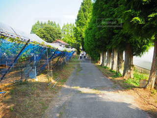 農園の小道の写真・画像素材[2338008]