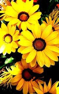 黄色い花の写真・画像素材[2342952]