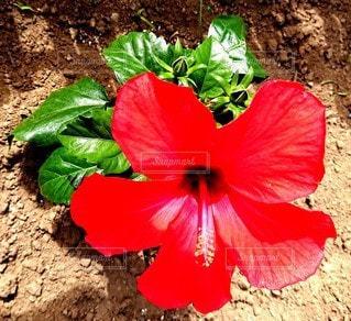 植物の上の赤い花の写真・画像素材[2846033]