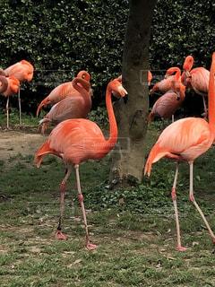 鳥の前に立っているフラミンゴの写真・画像素材[2138980]