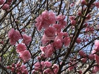 植物の上のピンクの花のクローズアップの写真・画像素材[2139085]