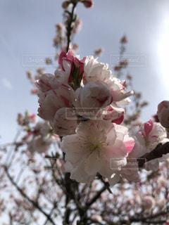花のクローズアップの写真・画像素材[2139087]