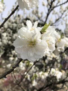 花のクローズアップの写真・画像素材[2139089]
