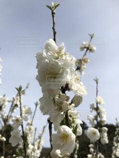 花のクローズアップの写真・画像素材[2139090]