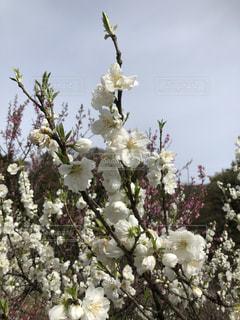 木の上の花の花瓶の写真・画像素材[2139091]