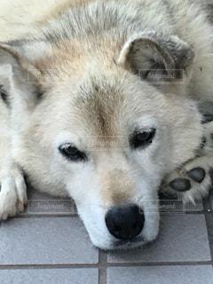 犬 - No.159062