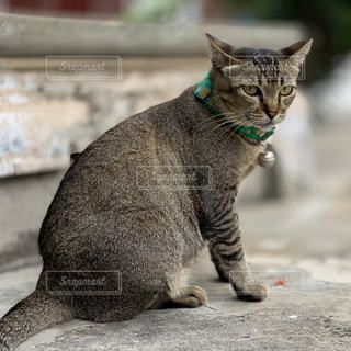 建物の上に座っている猫の写真・画像素材[2140382]