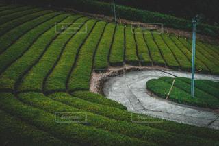 緑色の畑のクローズアップの写真・画像素材[2950889]